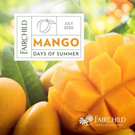 fairchild mango festival, miamicurated