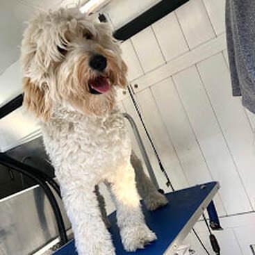 Mobile Dog Grooming Miami | Dog Grooming Mobile | Mobile ...