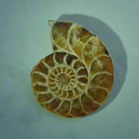 AyiShaTaTah fossil flad