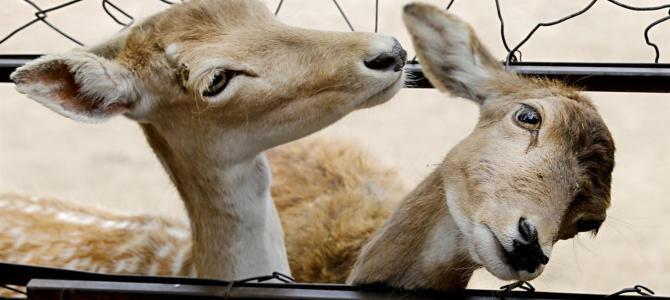 Zoo de Buenos Aires se convierte en ecoparque
