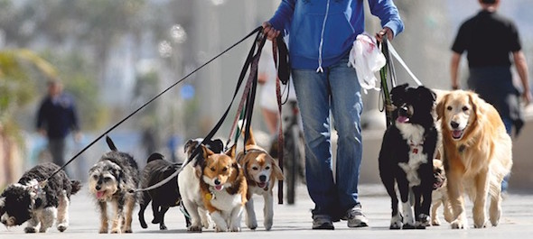 Curiosidades da Argentina - Passeador de cachorros