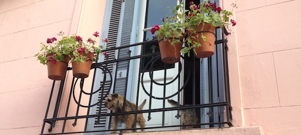 Detalle de San Telmo Perros