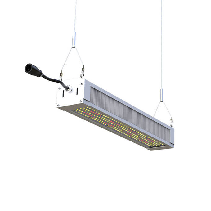 300w-grow-light