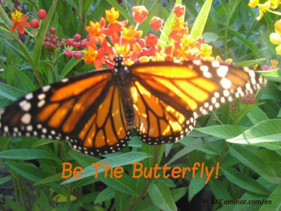 butterfly-process