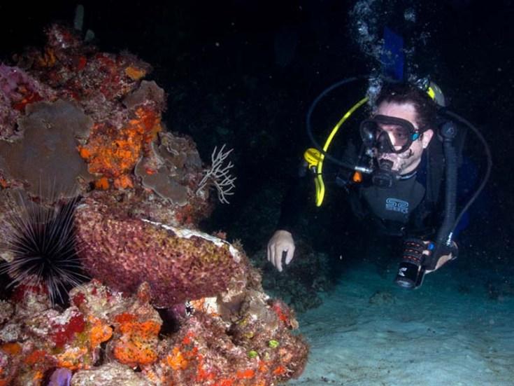 buceo nocturno tour cancun