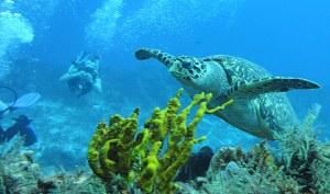 buceo en cancun
