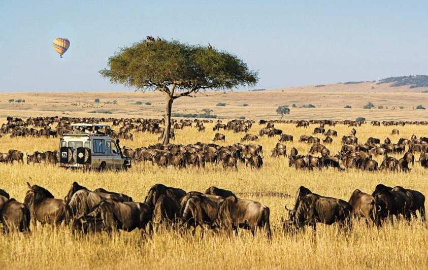 Masai mara budget safari | Ummi Goes Where?