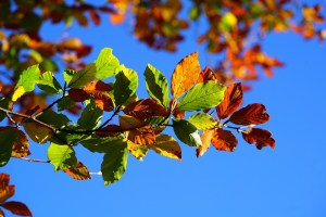 Is Fall the Best Time for Landscaping?