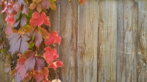 Prepare Your Fence for Fall Temperatures and Winter Weather with these Easy Tips