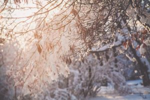 How to Effectively Winterize the Trees in Your Landscape this Season