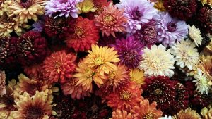 6 Flowering Plants for a Maryland Fall