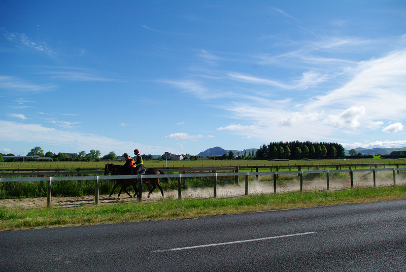 Working track Racecourse Road Cambridge New Zealand