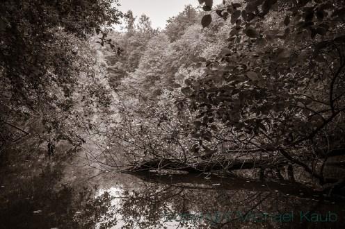 Verwunschen in einem engen Tal gelegen: Der Quarzitsteinsee. (Foto: Michael Kaub)