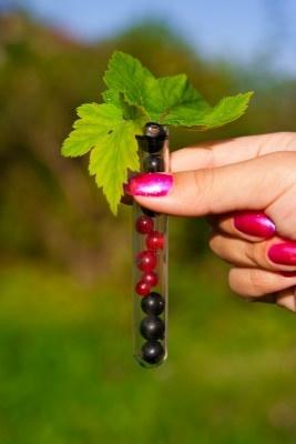 Genetically Modifying Plants