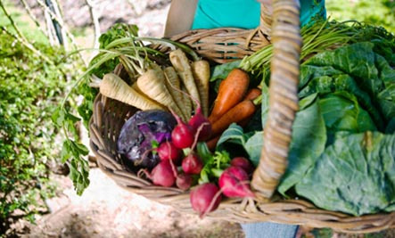 Basket of colorful vegetables