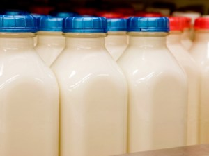 Jars of Milk