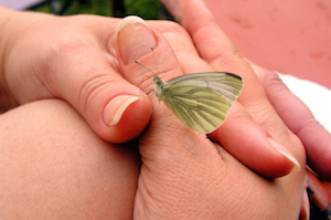Hands and Butterfly