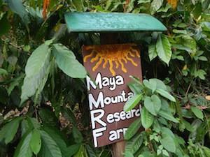 Research Farm in Belize