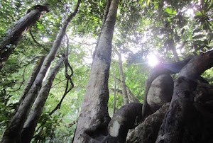 Forest in Belize