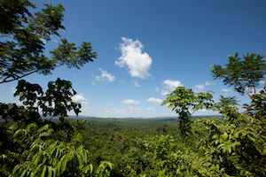 Belize Forest