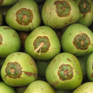 Green Coconuts