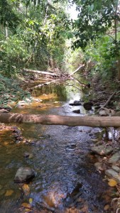 Belize Stream
