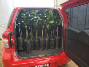 BEV Tree Planting