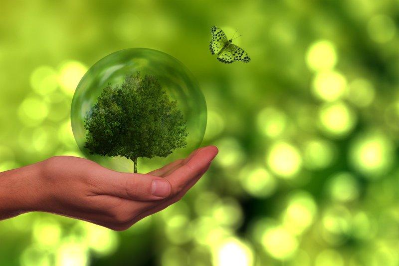 Tree Butterfly Globe Energy