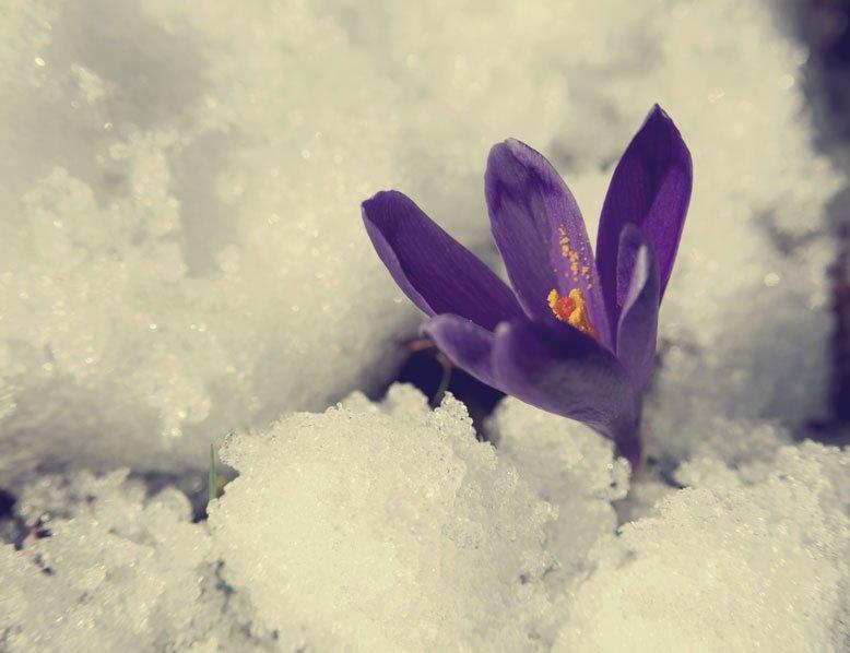 winter-into-spring-analogy-michael-woroniecki-blog-2016