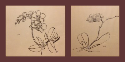Orchids, ink on paper, 2008 Bruxelles - private collection Belgium