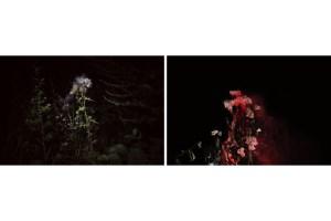 Flowering (sx) e Night Blooming (dx), 2016, 20x30cm, carta baritata di tipo prestige 340 gsm, esemplare 1 in edizione di 5 (in vendita come dittico – €300