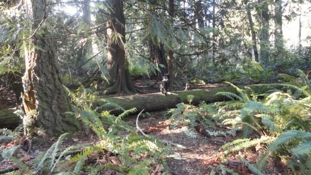 Howe Park, Port Orchard, Washington, Michele Cosper