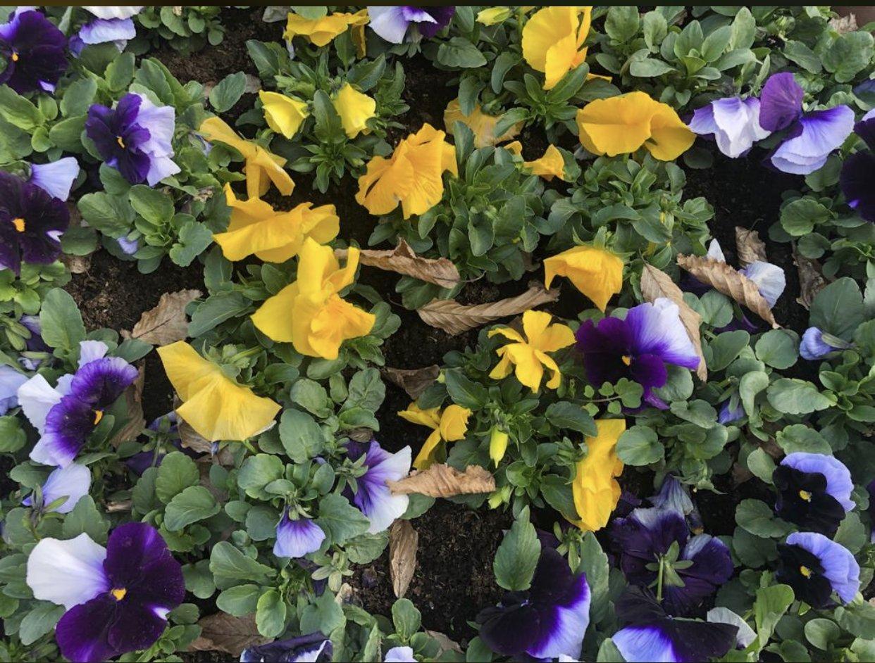 la primavera ai tempi del covid-19