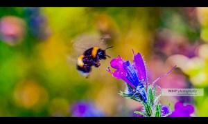 Photographie de nature par Michel HUGUES Photography - www.michelhugues.com