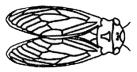 picto cigale