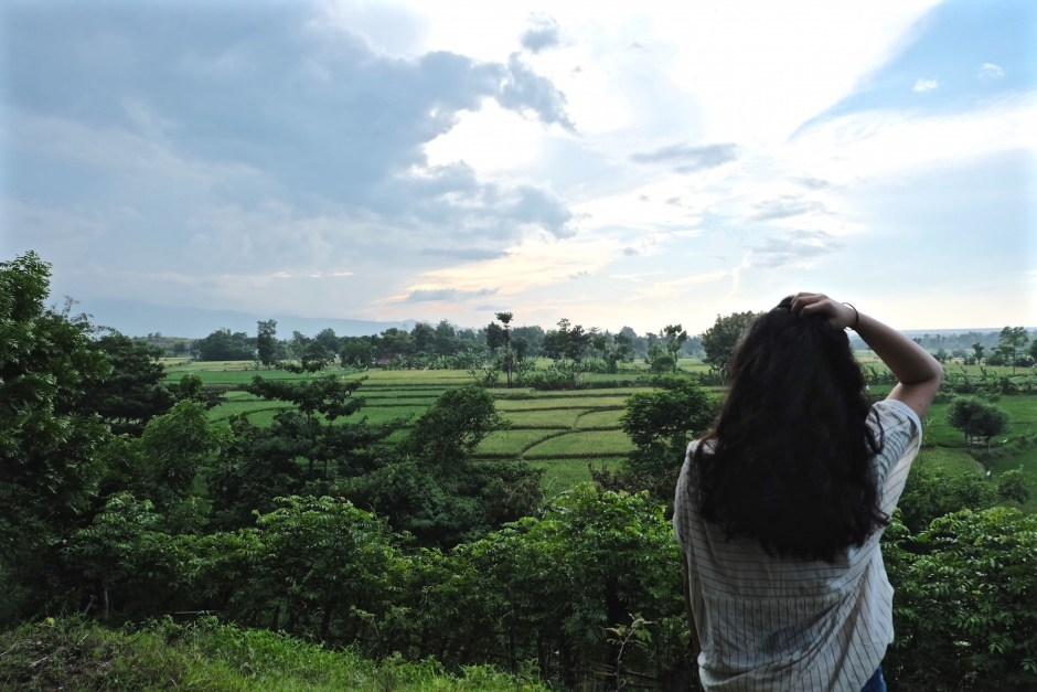 Looking over the paddy field
