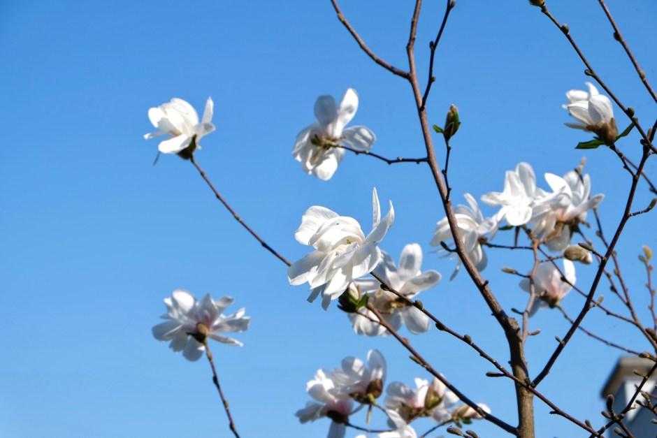 Flower in Switzerland Fribourg Blue Sky