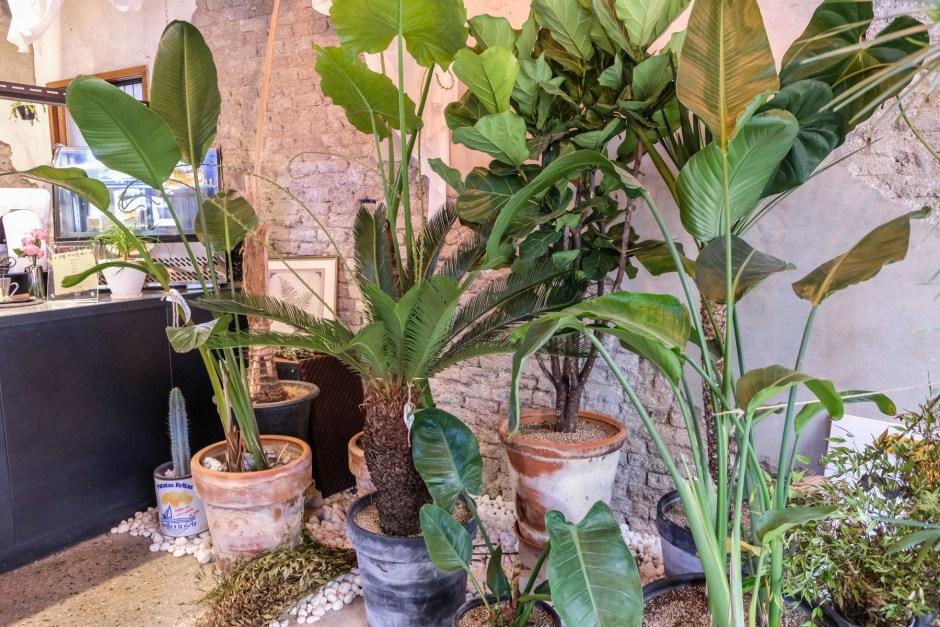 cafe botanique seoul travel 5