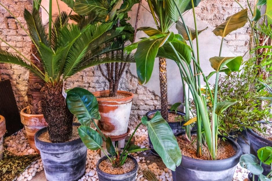botanique cafe in seoul travel