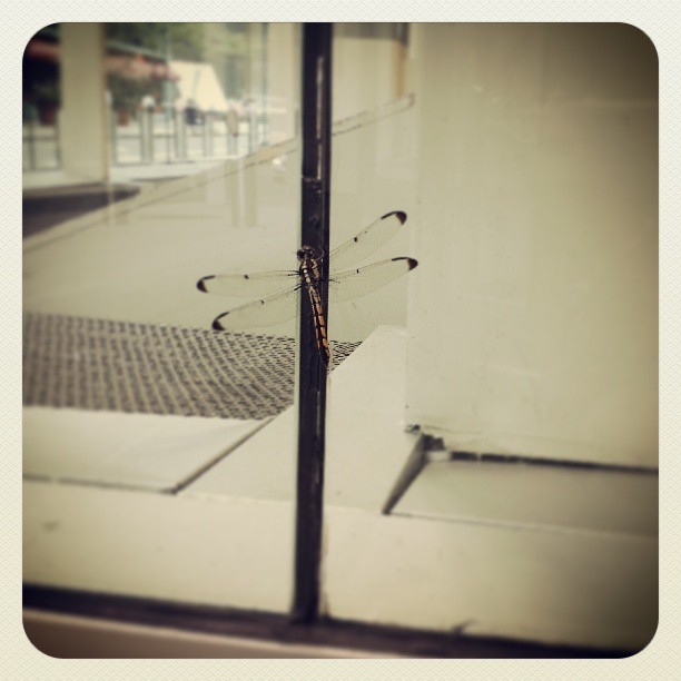Dragonfly #newyork #photography