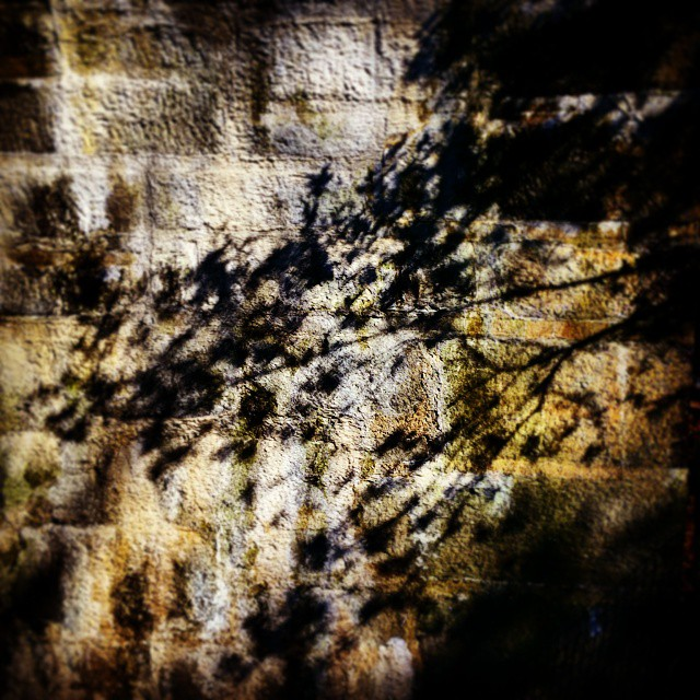 Shadows, Fort Tryon Park #nyc #forttryon #abstract #art #washingtonheights #inwood