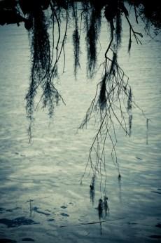 06-Landscapes-0109-MagnoliaPlantation