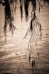 07-Landscapes-0106-MagnoliaPlantation