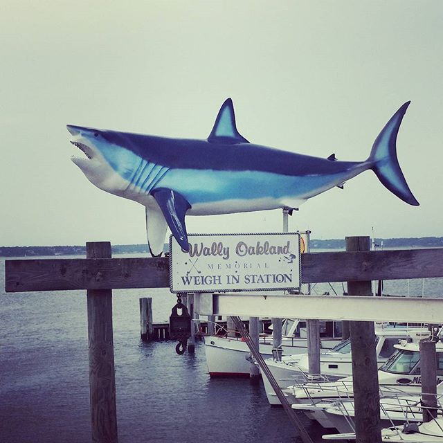 Landshark #hamptonbays #fake #shark #greatwhiteshark #greatwhite