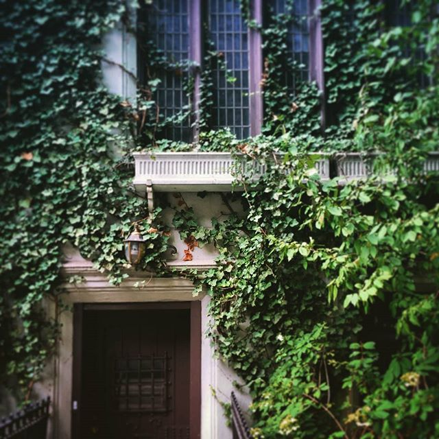 Greenwich Village Brownstone #nyc #greenwichvillage #architecture #window #plants #ivy