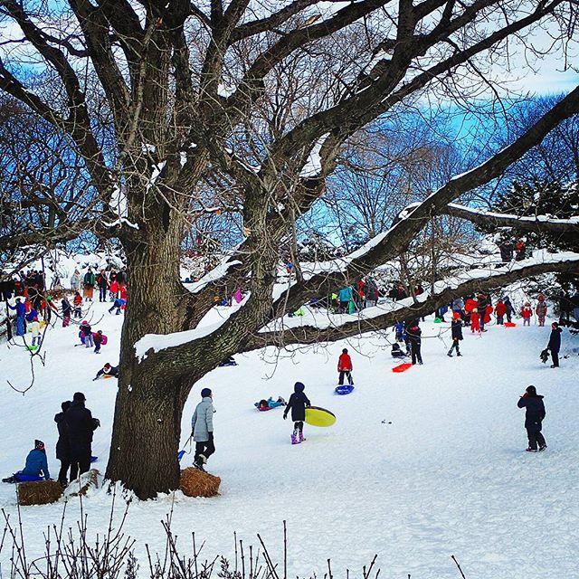 Sledding ! #washingtonheights #newyork #forttryonpark #snow #jonas #stormjonas #winterfun #olympus #adoramapix