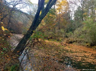 Along the Eno River