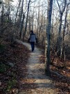 On the Sassafras Trail