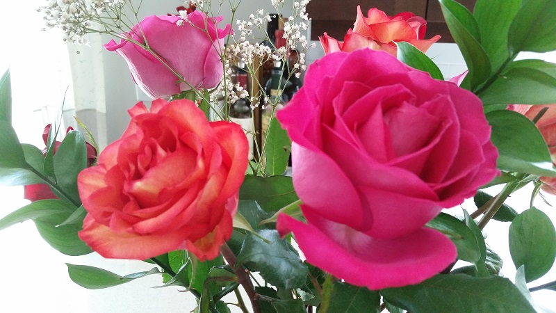 The Meaning of Different Rose Colors and Types