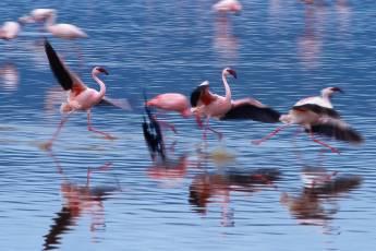 mp-bird-ibis-003-07
